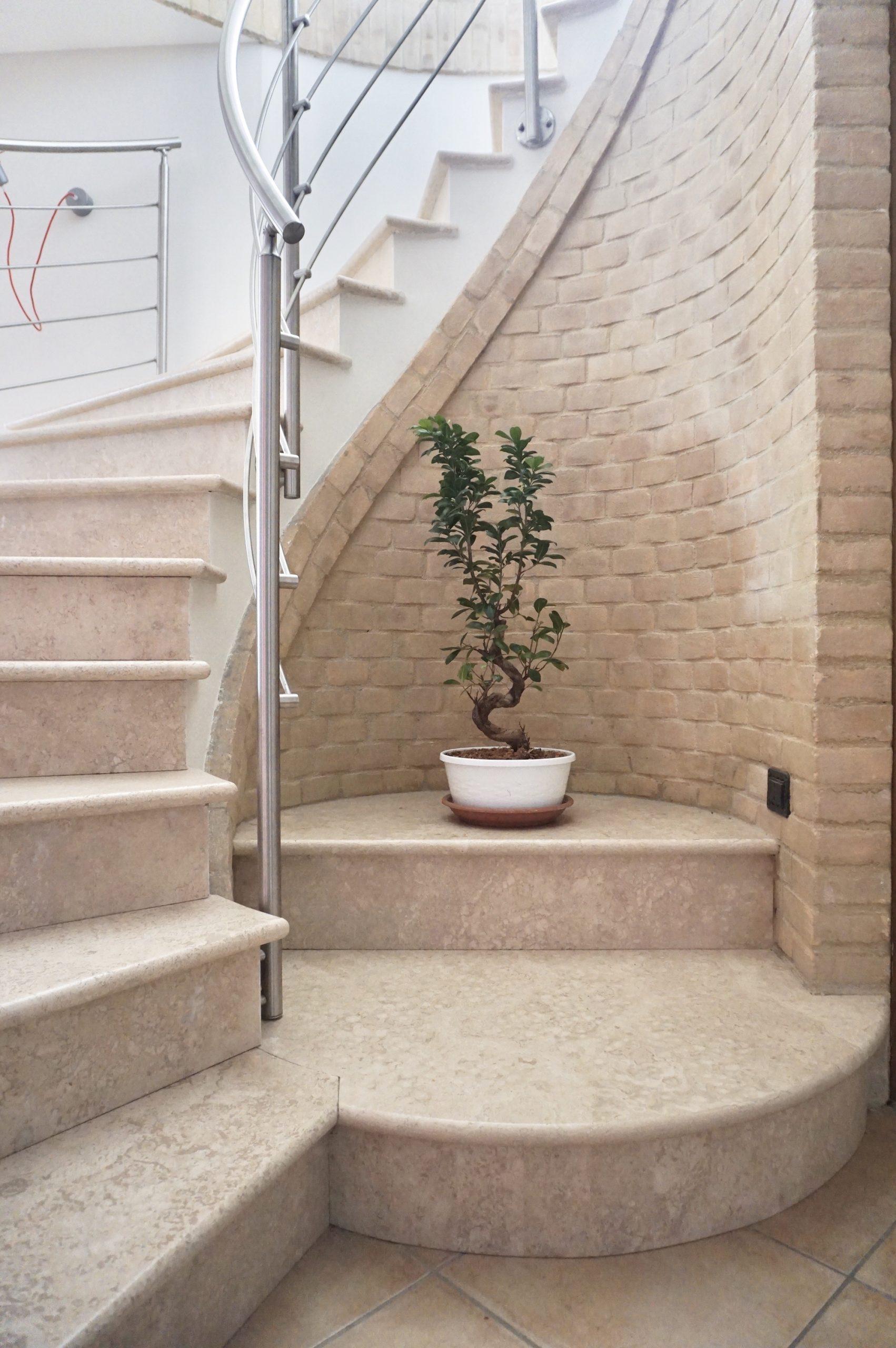 ingresso bonsai